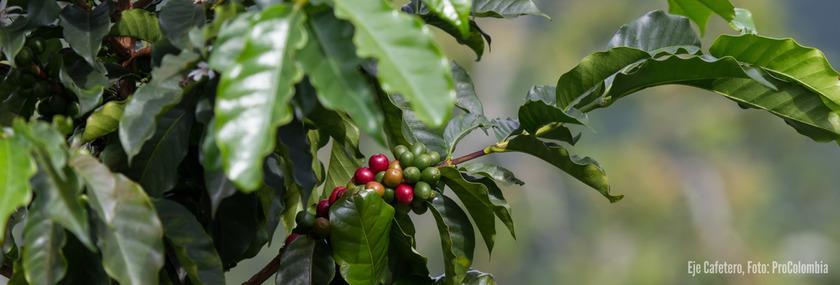Kolumbien Reisen | Panorama Kaffeedreieck