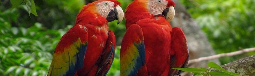 kolumbien-reisen-erholung-der-natur 1.jpg