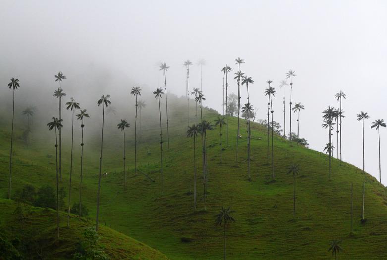 Kolumbien Reisen | Palmen im Valle de Corcora