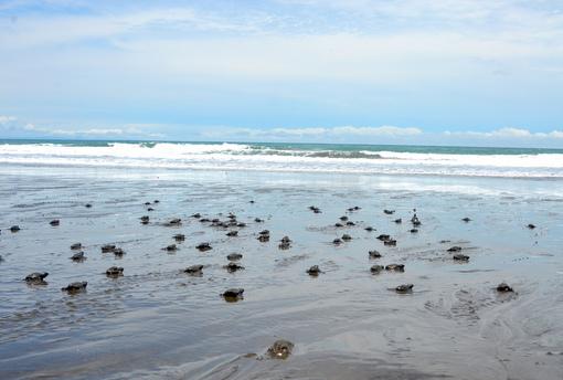 Traumstrände Kolumbiens | Nuqui