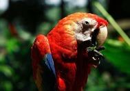 Kolumbien Reise | Papagei, Amazonas