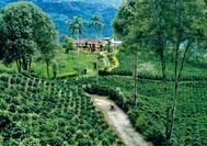 Hacienda im Kaffeedreieck