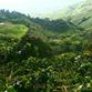 Kolumbien Reisen | Kaffeplantage San Alberto, Kaffeedreieck