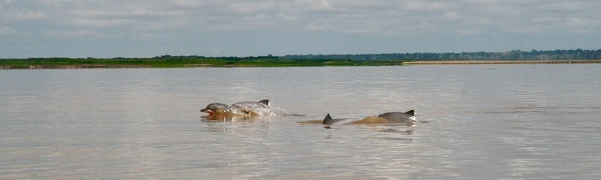Kolumbien Reise | Delfine im Amazonas